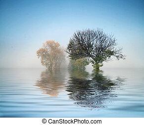 meraviglioso, colpo, natura