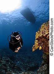 mergulhador, verificar, algum, incomum, coral, formações,...