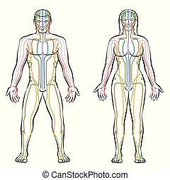 Meridian System Male Female Body Colored Meridians -...