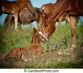 merrie, en, foal, in, wei