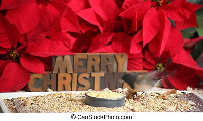 merry Christmas bird - a songbird eats at a feeder with...
