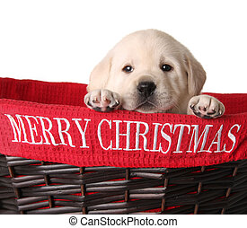 Yellow lab puppy in a Merry Christmas basket.