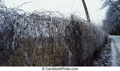 Mesh netting - Frostiness rabitz in garden park