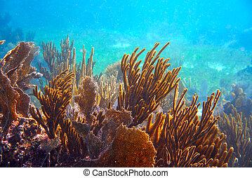 mesoamerican, barrera, grande, maya, arrecife