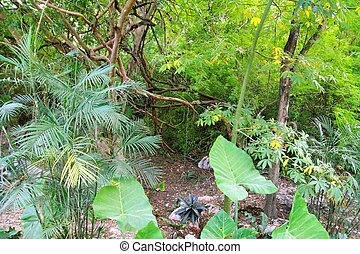 messico centrale, yucatan, giungla, foresta pluviale,...