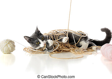 Messing with Yarn - A gray and white kitten tangled in the...