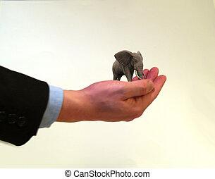 messo pericolo, elefante