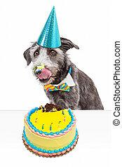 Messy Birthday Dog Eating Cake