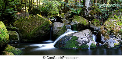 mest rainforest, panorama, flod