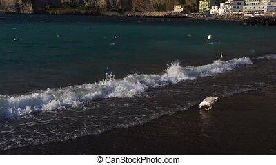 Meta di Sorrento, southern Italy - seaguls enjoying sea at...