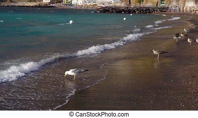 Meta di Sorrento, southern Italy - seaguls enjoyng the beach...