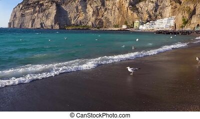 Meta di Sorrento, southern Italy - seaguls walking at the...