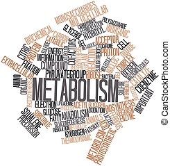 Metabolism - Abstract word cloud for Metabolism with related...