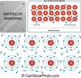 Metallic bonding vector illustration. Labeled metal ions and...