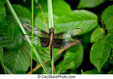 Metallic dragonfly on grass