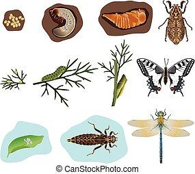 metamorfosi, di, insetti
