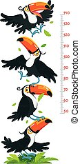 Meter wall or height meter with funny toucans. Height chart or wall sticker. Childrens vector illustration with scale from 50 to 140 centimeter to measure growth