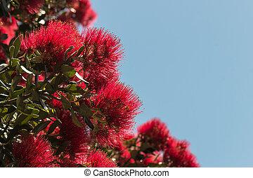 Metrosideros excelsa tree flowers