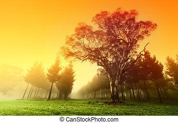 metsző, erdő, napkelte