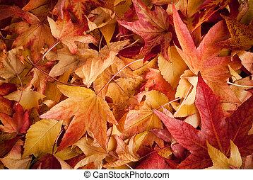 mette foglie, in, autunno