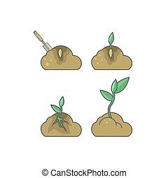 mettre, comment, croissance, plant., étapes