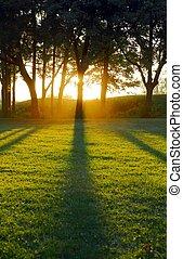 mettre soleil, coulage, arbre, ombres