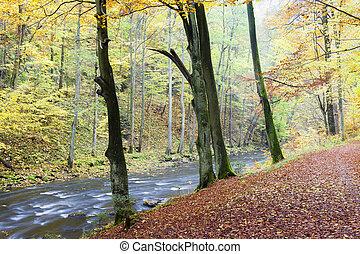 Metuje river in autumn, Czech Republic