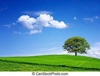 meu, meio ambiente