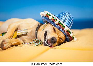 mexicain, chien, ivre