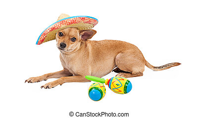 Mexican Chihuahua Dog With Sombrero and Maracas