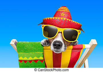 mexican dog on vacation relaxing on a deck chair