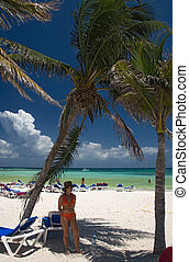 mexico on beach toma under palm