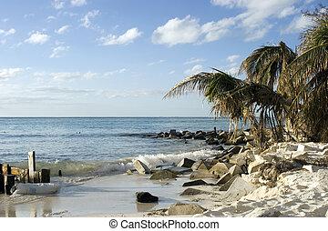 Mexico Palm trees