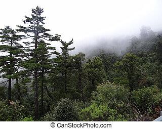 mexikanisch, rainforest