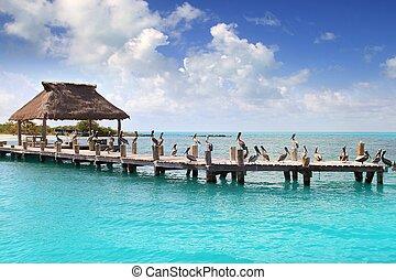 mexique, île, nature, contoy, bois, jetée, réserve