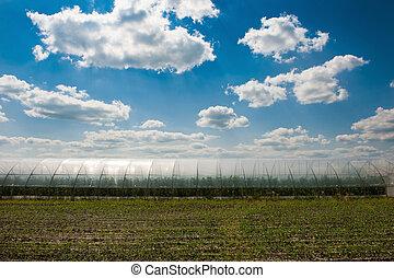 mező, ég, zöld, felhős, alatt