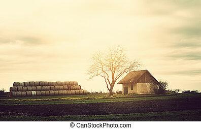 mező, épület