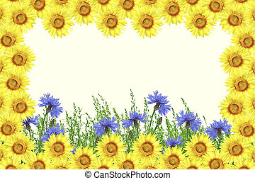 mező, búzavirág, blue virág, ellen, a, háttér, közül, a, nyár, parkosít.