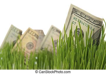 mező, befektetés