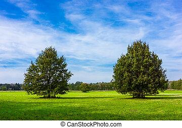 mező, blue, sky., tölgyfa