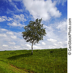 mező, fa