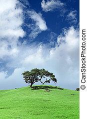 mező, fa, zöld parkosít