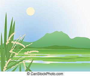mező, háttér, hántolatlan rizs