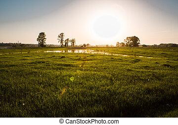 mező, képben látható, napnyugta