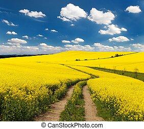 mező, közül, rapeseed, noha, vidéki út, és, gyönyörű, felhő