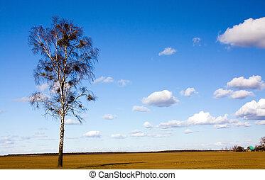 mező, nyírfa
