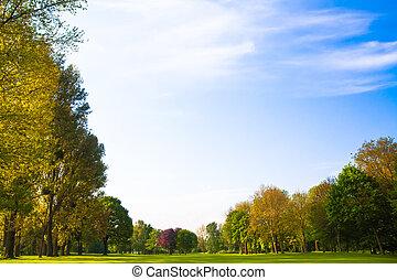 mező, zöld, fa.