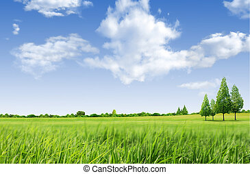 mező, zöld fa, táj