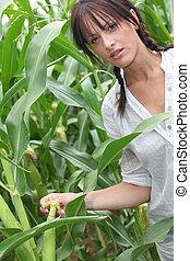 mezőgazdász, állt, alatt, gabonaszem terep
