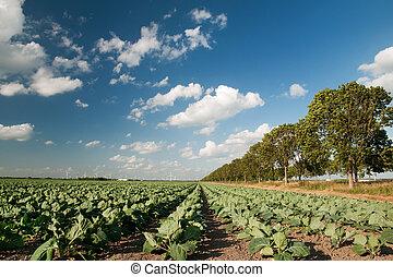 mezőgazdaság, táj